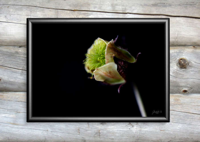 GCS_Art_Photography Wild flower collection_mockup_horizontal_1.jpg
